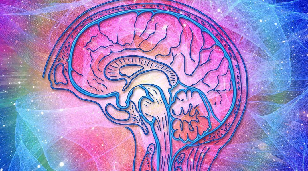 the brain supplement